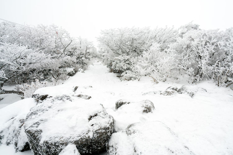 ASIA Halla Mountain Jeju Korea Beauty In Nature Clear Sky Close-up Cold Cold Temperature Day Frost Frozen Jejuisland Landscape Nature No People Outdoors Scenics Sky Snow Tranquil Scene Tranquility Tree Volcano Winter