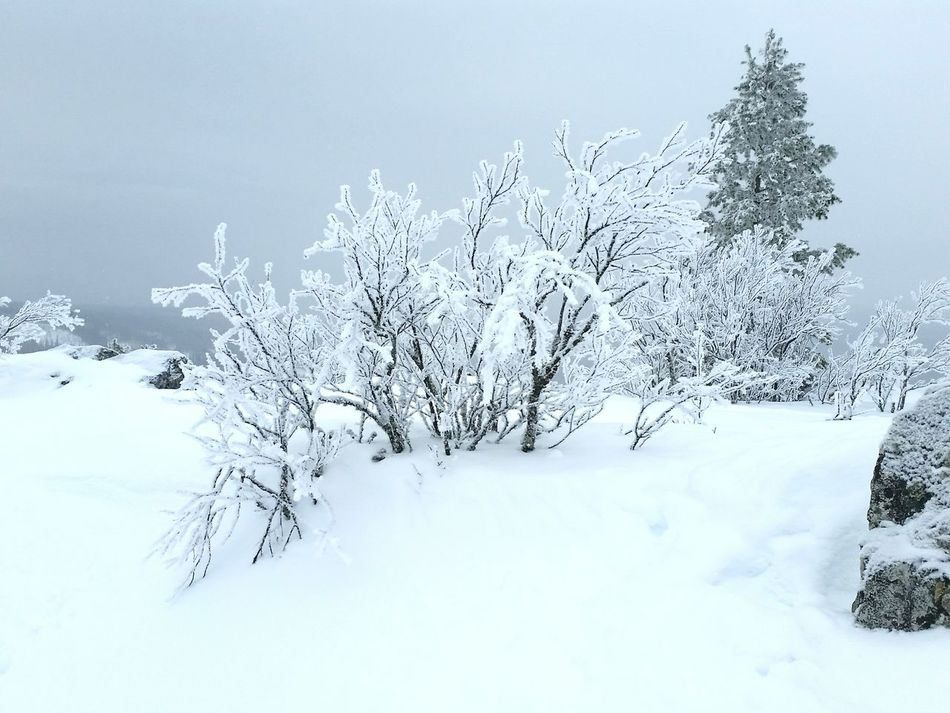 No filter needed! Nature No People Beauty In Nature Outdoors Close-up Day Tree Sky Offpist Skiing Ski Like Miuntains Nature Cold Temperature Winter Snow