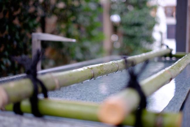 赤城神社 Close Up Close-up Focus On Foreground Fujifilm Fujifilm X-E2 Fujifilm_xseries Japan Japan Photography Kagurazaka Selective Focus Shrine Tokyo Water Xf35 ちょうずや 手水舎 東京 神楽坂 赤城神社