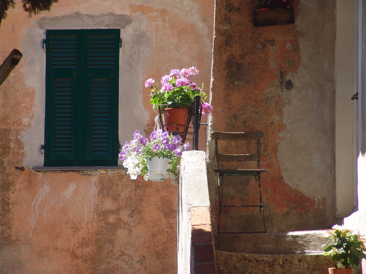 flower, architecture, building exterior, built structure, window, pink color, no people, potted plant, day, window box, outdoors, growth, plant, nature, beauty in nature