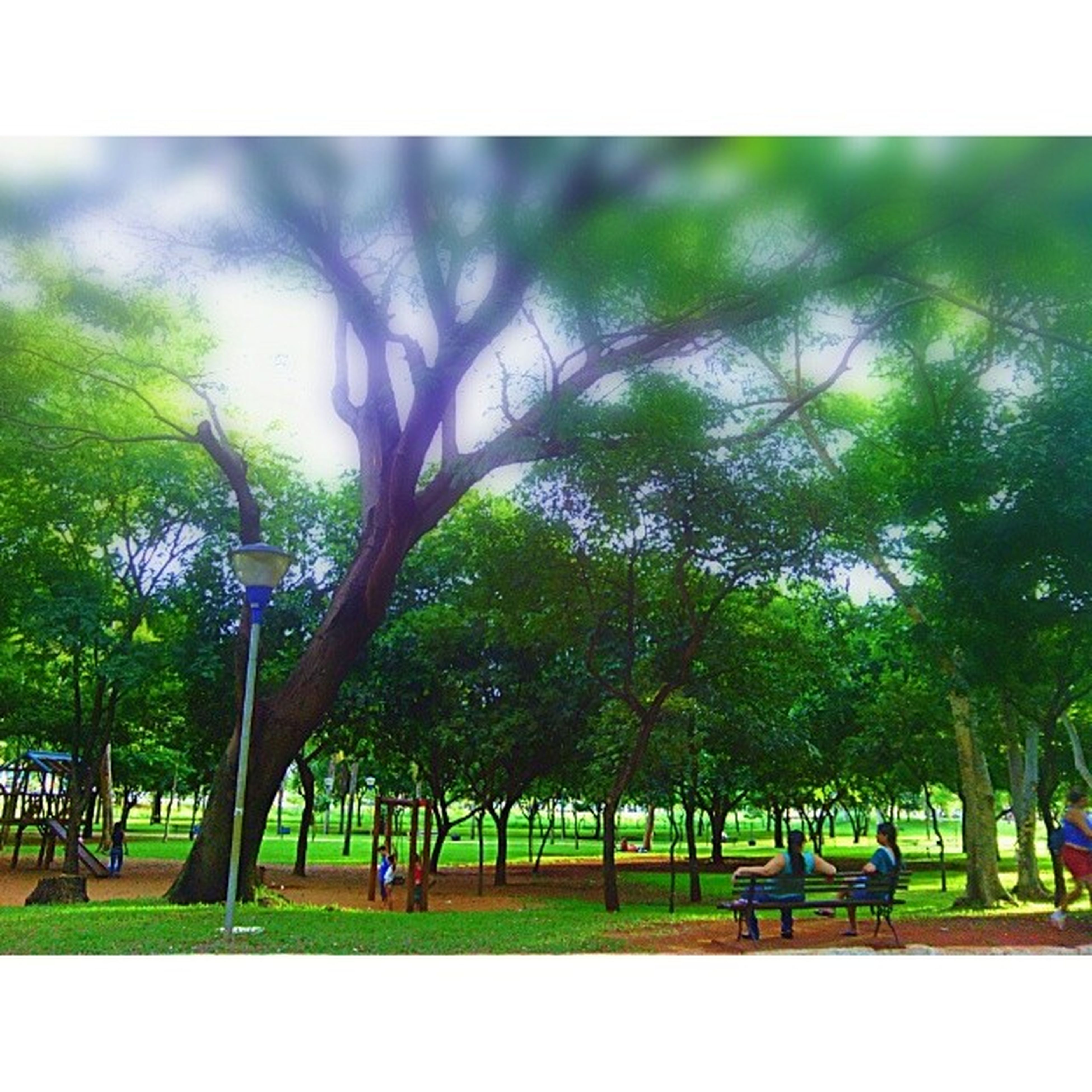 tree, transfer print, green color, growth, auto post production filter, tranquility, grass, nature, tranquil scene, beauty in nature, park - man made space, branch, scenics, tree trunk, day, sky, field, outdoors, green, park
