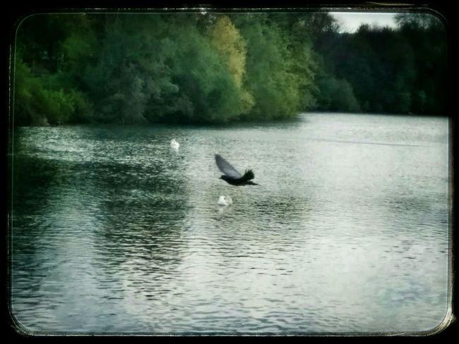 Birds Of EyeEm  l'envol Water_collection