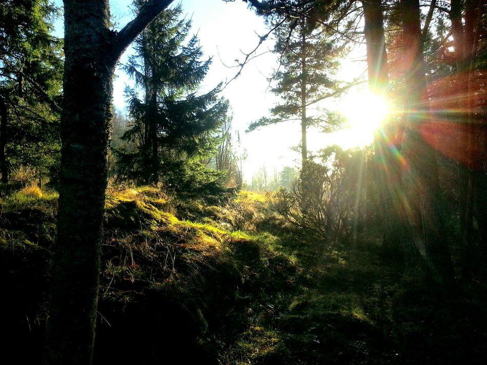 The Old Forest Sweden Art