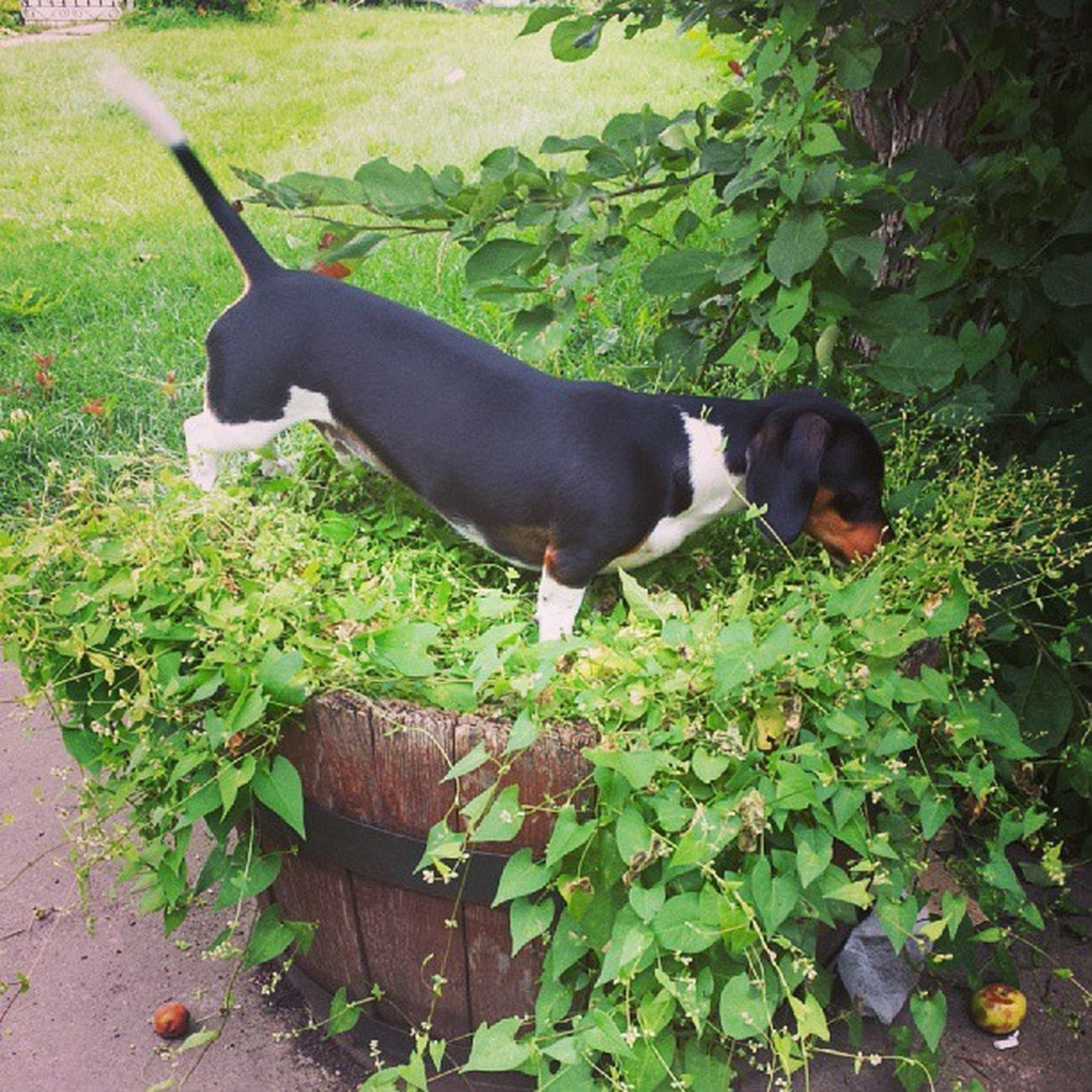 He has an entire yard Weirddogsofinstagram Dogsofinstagram Monster