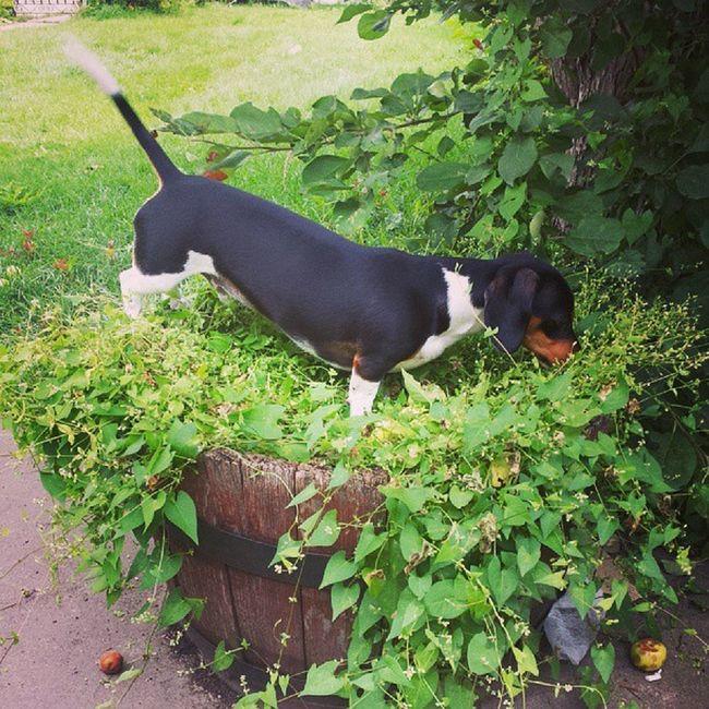 He has an entire yard Weirddogsofinstagram Dogsofinstagram Monster