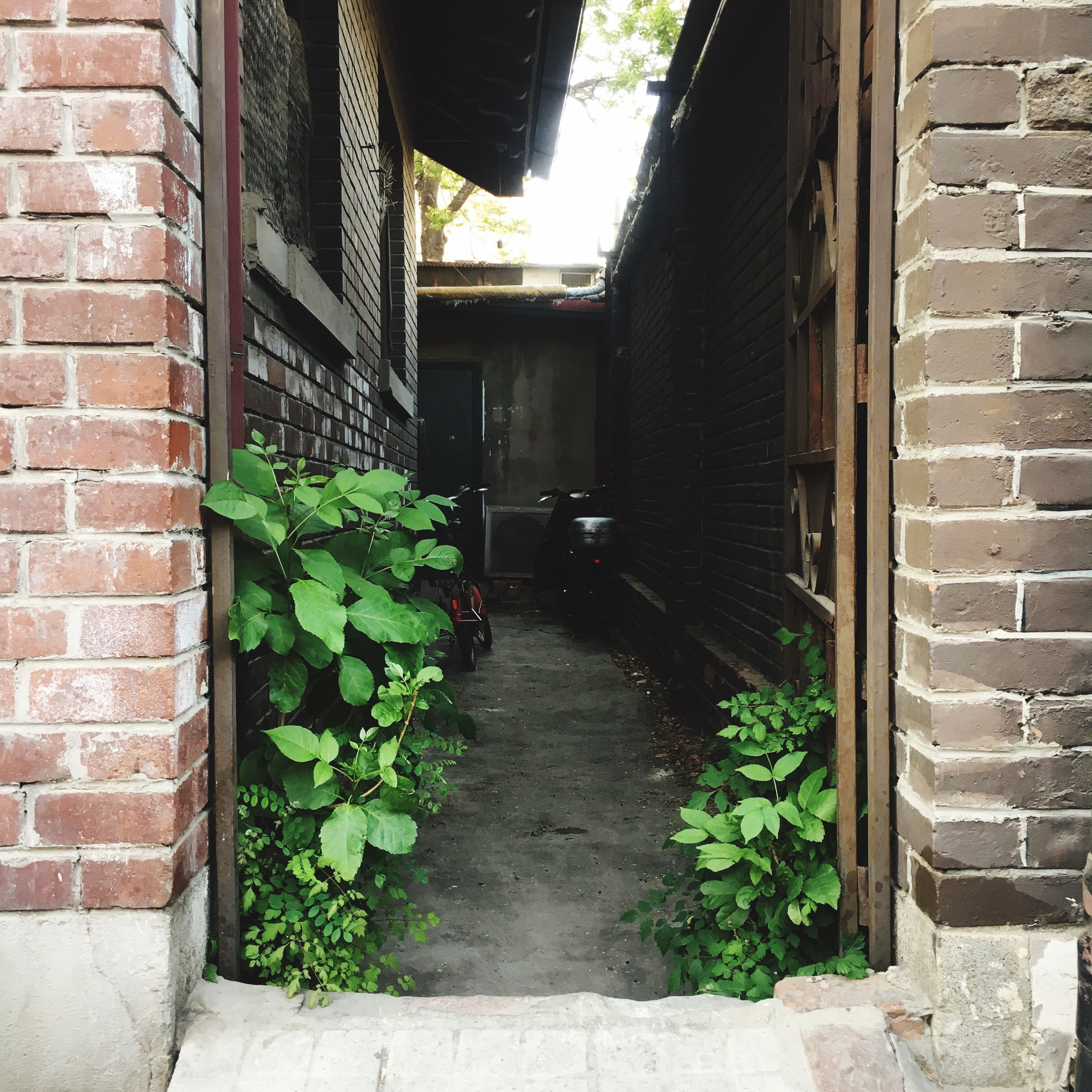 architecture, building exterior, plant, built structure, house, brick wall, outdoors, no people, day, potted plant, growth, window, nature, window box
