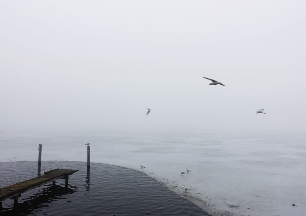 foggy morning... Flying Sea Nature Beach Water Bird Seagull Beauty In Nature One Animal Animal Wildlife Fog Tranquility No People Vacations Outdoors Animals In The Wild Day Sky Eco Tourism Winter Lake Lake View Lakeside Müggelsee