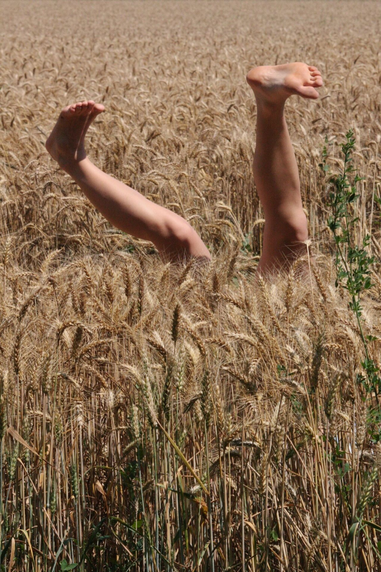 Aliens Signals Corn Field Legs Resistance