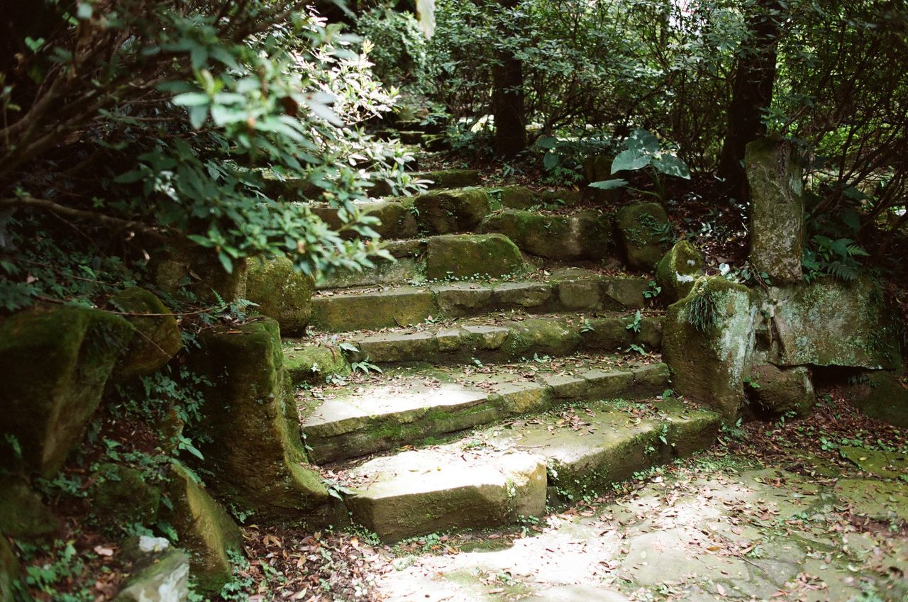 Day Film Photography Filmisnotdead Nature No People Outdoors Staircase Steps Steps And Staircases Tree