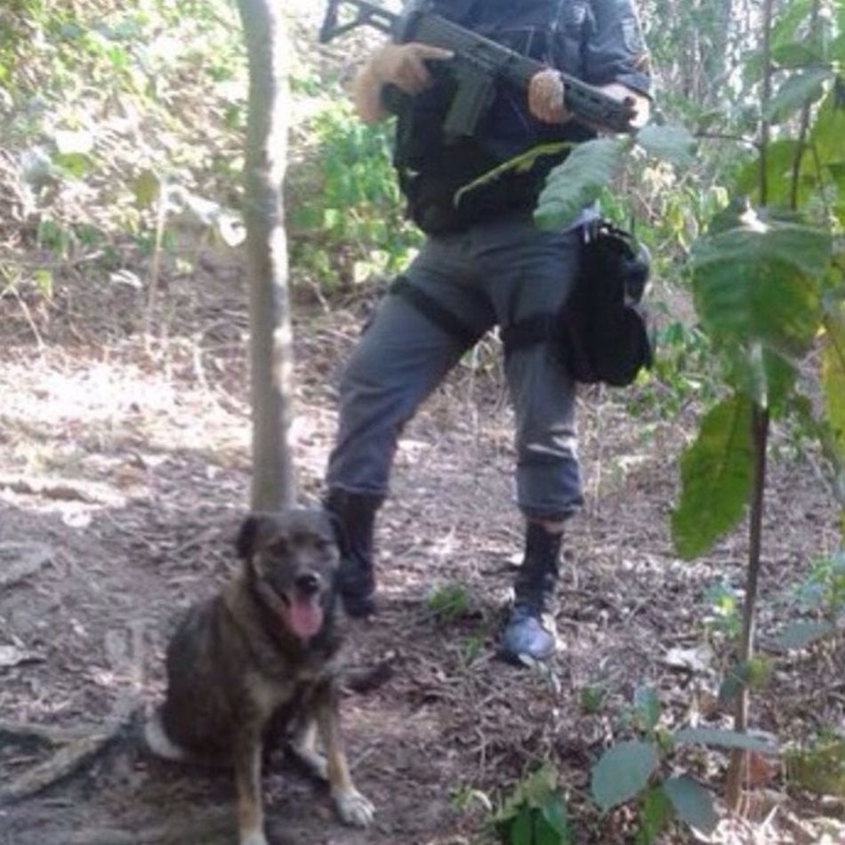 Heroine Hero Dog Love Great History True History Police Force Eis a fiel Cb Bahiense, essa cadela, foi morta no último sábado dia 21, ao defender a guarnição da UPP da Pedra do Sapo, no Complexo do Alemão. Ela denunciou a aproximação de um traste armado com um AK-47, que pretendia atacar os policiais que faziam patrulha na localidade. Ela não só deu o alarme, como com valentia partiu pra dentro do marginal para defender seus amigos policiais. Morreu com um tiro de fuzil, como heroína, mostrando mais racionalidade que muitos pretensos racionais, ao escolher o lado certo da força. E por isso, merece que sua memória seja aqui valorizada como grande companheira dos guerreiros da UPP que sempre foi. Here is the faithful Cb Bahiense, that dog, was killed last Saturday 21, when defending the GC of the UPP of Pedra do Sapo, in Complexo do Alemão in Rio de Janeiro. She denounced the approach of a freighter armed with an AK-47, which was intended to attack police officers patrolling the area. Not only did she give the alarm, but with courage she went inside the marquee to defend her police friends. She died with a rifle shot, like heroin, showing more rationality than many would-be rationals, choosing the right side of the force. And for that, it deserves that its memory here is valued like great companion of the warriors of the UPP that always was. This picture, not make for me, but I need explain this case.
