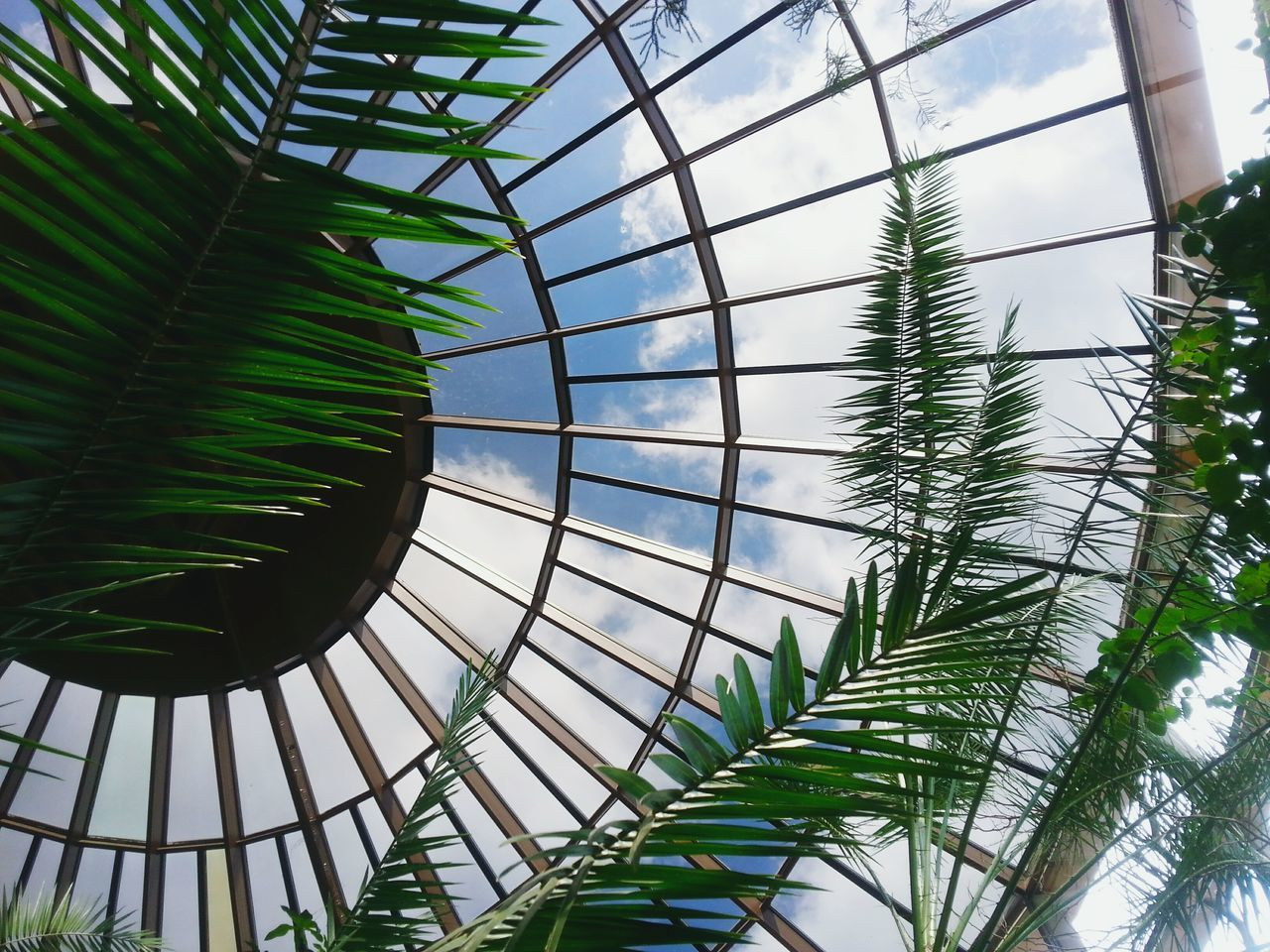 Beautiful stock photos of jungle, Built Structure, Cloud, Day, Greenhouse