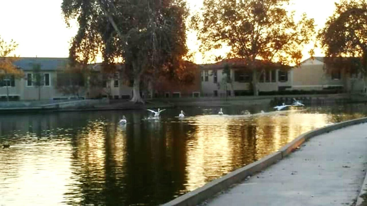 Water Tree Reflection Building Exterior Built Structure Outdoors Nature Architecture Day City No People Animal Themes Sky Beauty In Nature Stork California CaliforniathroughmylensScenery Tranquility Beauty In Nature Parks And Recreation