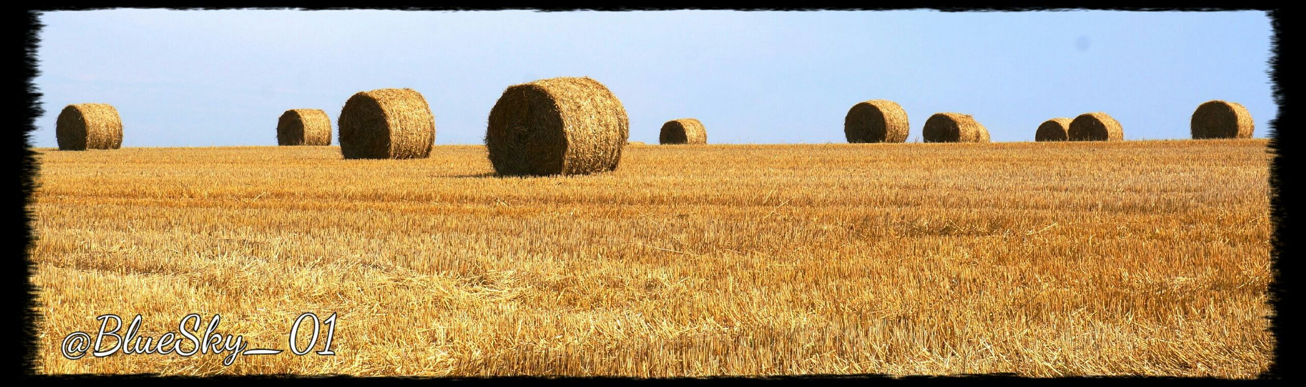 agriculture, rural scene, field, farm, crop, landscape, transfer print, auto post production filter, clear sky, hay, tranquility, sky, nature, tranquil scene, growth, building exterior, bale, abundance, built structure, cultivated land