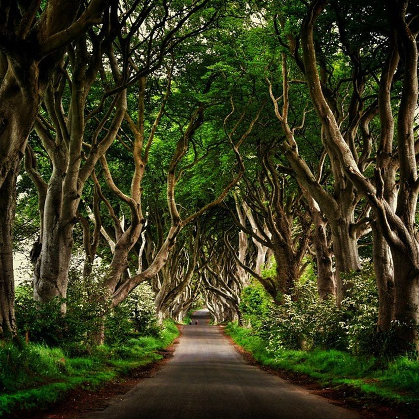 Lovely walk.. I've never seen a game of thrones episode.. How did I do DarkHedges Ireland