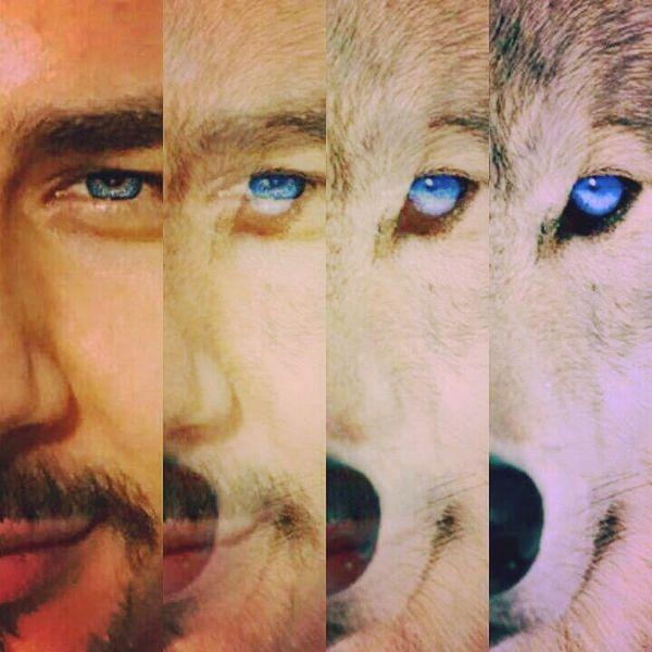 Kurt oğlunun akıbeti Kurt olur... Kurtlarda en Asil Bakış , Mavi Göz olan kurtlardır. Mavi #renktir, #hayattır.