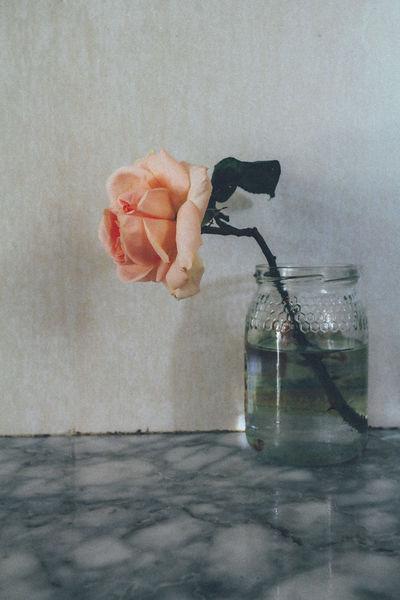 Bottle Indoors  Lonely Minimalism NX2000 Rose🌹 VSCO