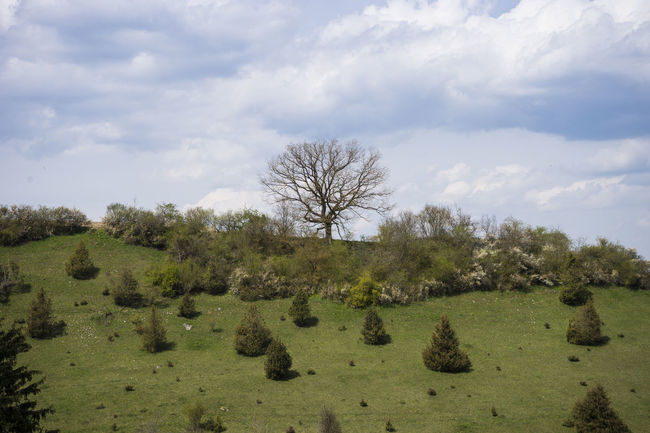 Bare Tree Beauty In Nature Cloud - Sky Cloudy Day Enjoying The View Hill Hügel Idyllic Landscape Landscape_Collection Lanschaft Nature No People Non-urban Scene Outdoors Rural Scene Tranquil Scene Tranquility Tree Wolken