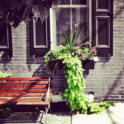 Window box. #window #flowers #lancasterpa #seat #mobilephotography #igersphilly #iphoneonly #iphonesia #instagood #canvaspop #instamood #instadailyy #webstagram #iphoneartists #picoftheday #photooftheday #igaddict #mnolt #igers #instagramhub #statig Instagramhub Webstagram Flowers Jj_forum Window Igaddict Iphoneonly Canvaspop Photooftheday Iphoneartists Iphonesia Igersphilly Picoftheday Mnolt Lancaster Instadailyy Mobilephotography Lancasterpa Instamood Seat Igers Jj  Instagood Statigram