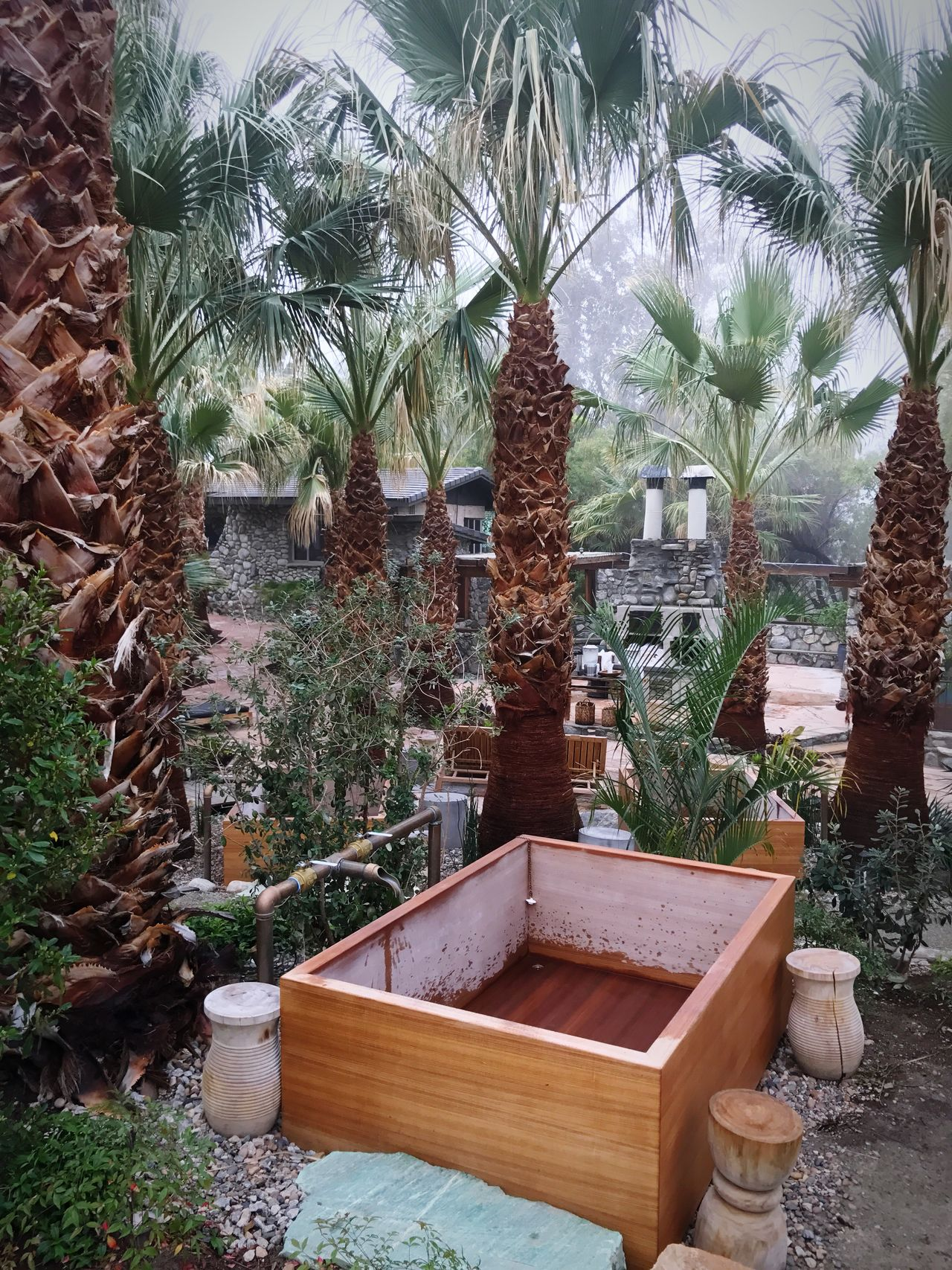 Bathtub between palm trees // Tree Palm Tree No People Growth Nature Built Structure Outdoors Architecture Day
