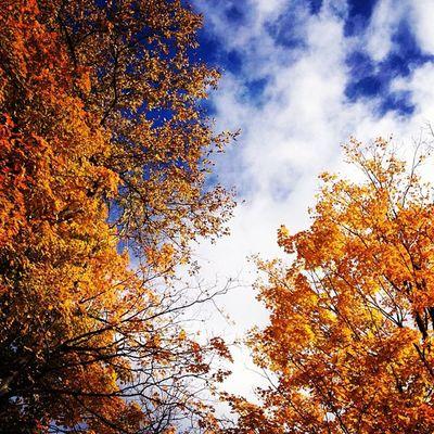 ?????? Fall Newpz