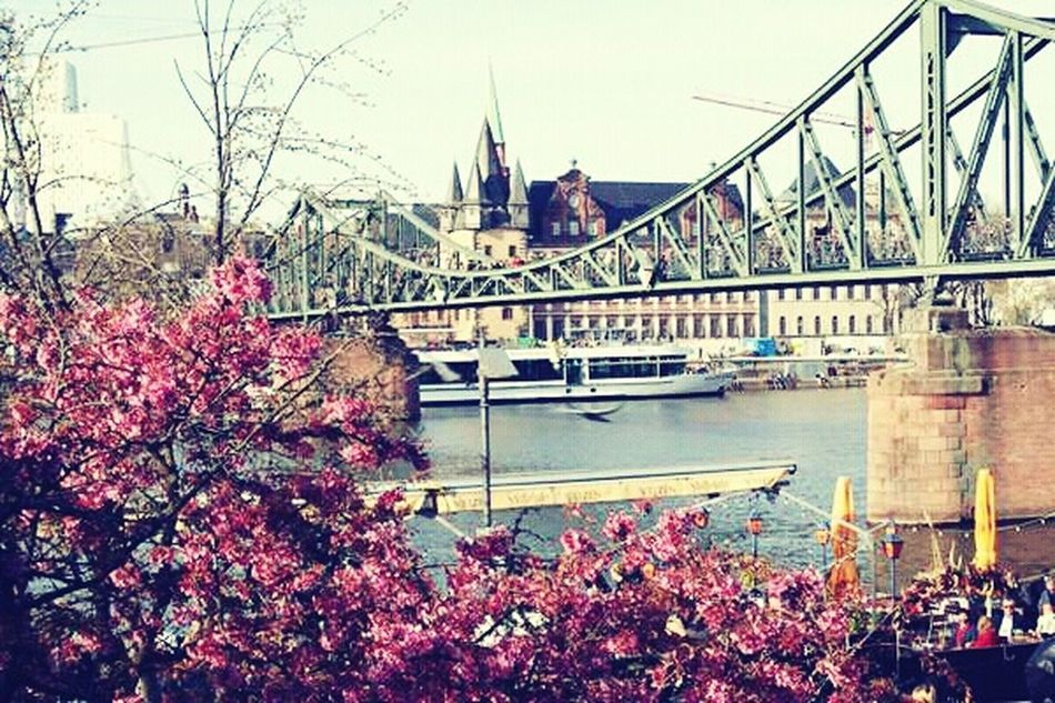 Flowers Frankfurt Germany🇩🇪 Bridge Main Frankfurt Am Main Riverside