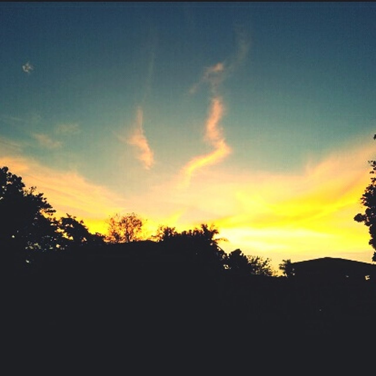 silhouette, sunset, tree, nature, sky, beauty in nature, scenics, tranquil scene, tranquility, no people, outdoors, landscape, day