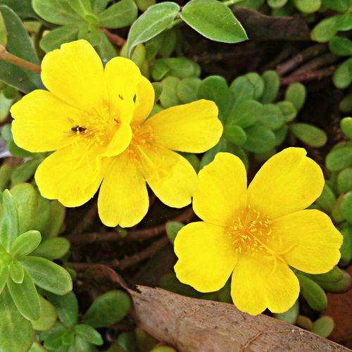Instagram Flower Nature