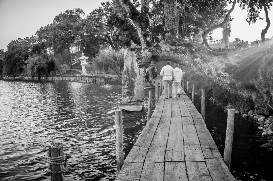 Bridge - Man Made Structure Buddha Buddha Eden Day Nasmgraphia Nature No People Outdoors Portugal Sky Travel Destinations Traveling Tree Water