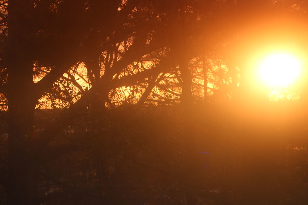 Beauty In Nature Burning Day Flame Forest Fire Heat - Temperature Nature No People Orange Color Outdoors Sky Sun Sunbeam Sunlight Sunset Tree