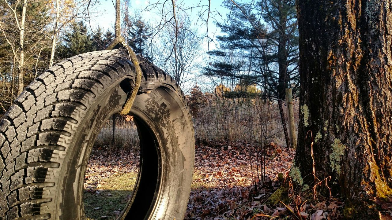 tree, tree trunk, tire, autumn, day, nature, no people, forest, wheel, outdoors, branch, bare tree, winter, beauty in nature, close-up