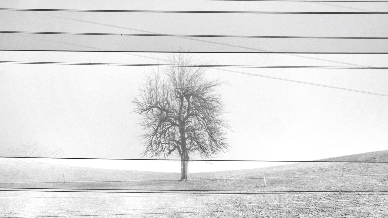 Tree Bare Tree Power Line  No People Cable Sky Outdoors Branch Growth Nature Power Supply Electricity  Tranquility Day Snow Beauty In Nature Cold Temperature Lone Blackandwhite Black And White Black And White Photography Black & White Switzerland Switzerlandpictures Swiss Landscape