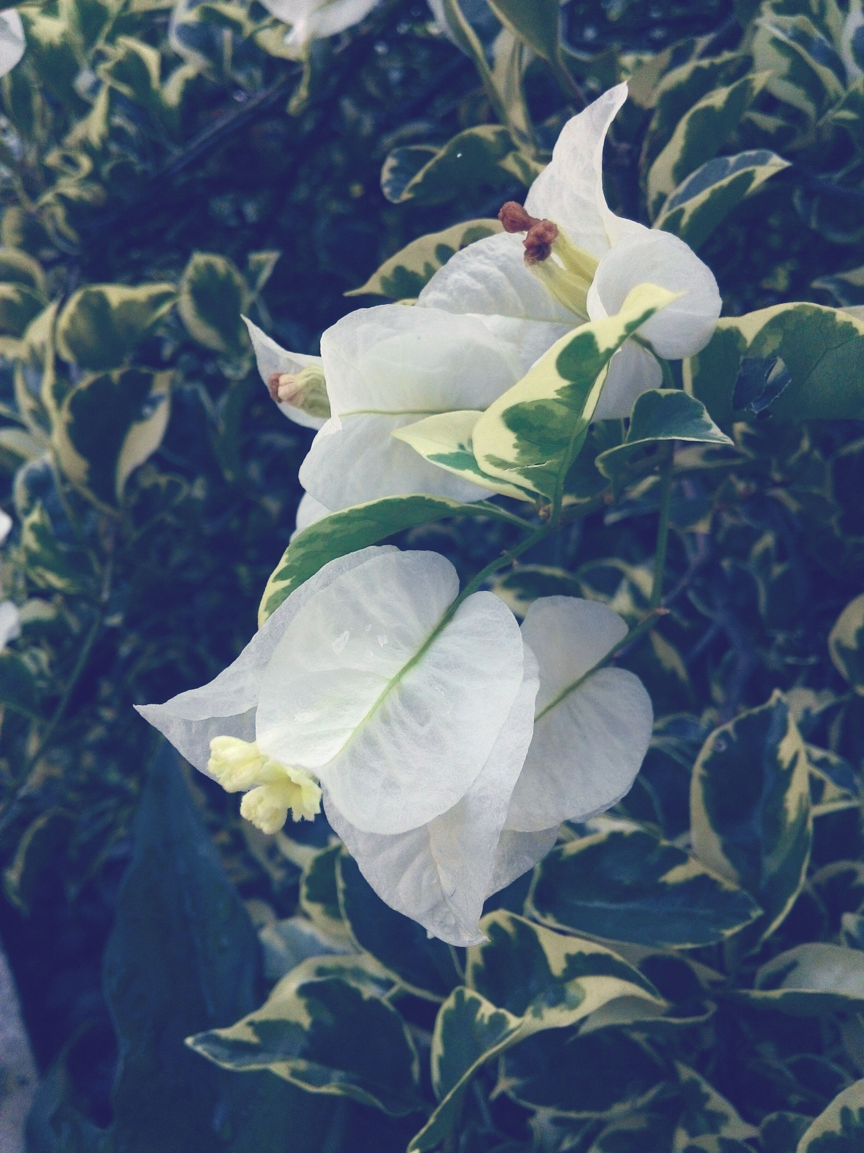 leaf, growth, plant, freshness, close-up, green color, flower, nature, fragility, beauty in nature, focus on foreground, day, no people, yellow, outdoors, petal, growing, bud, blooming, sunlight