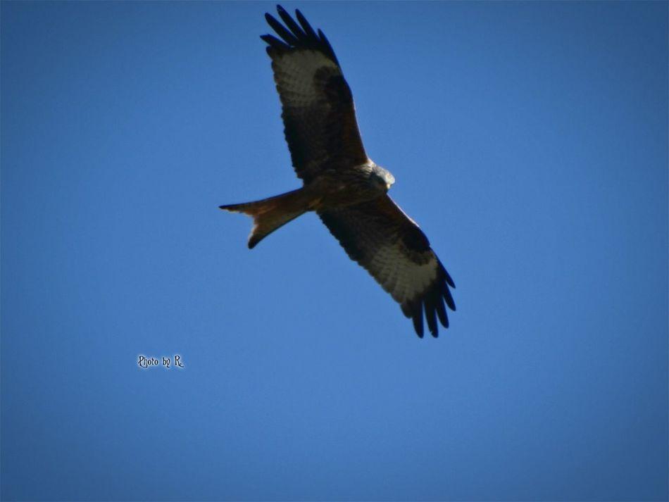 Freedom Flying Bird Animal Wildlife Nature Taking Photos Photography Outdoors Beauty In Nature EyeEm Best Shots Eyeem Best Shot