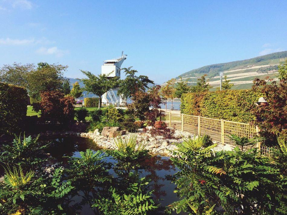 Beautiful stock photos of park, Bingen am Rhein, Built Structure, Day, Garden