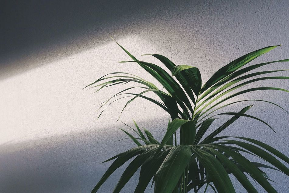 Leaf Leaves Green Color Plant Growth Springtime Spring Palm Tree Shadow Sunset Sunlight Light And Shadow Indoors  Nature Love Close-up Day Life Lifestyles Minimalism Enjoying The Sun Minimal Freshness Style Home Art Is Everywhere EyeEm Diversity The Secret Spaces TCPM Break The Mold