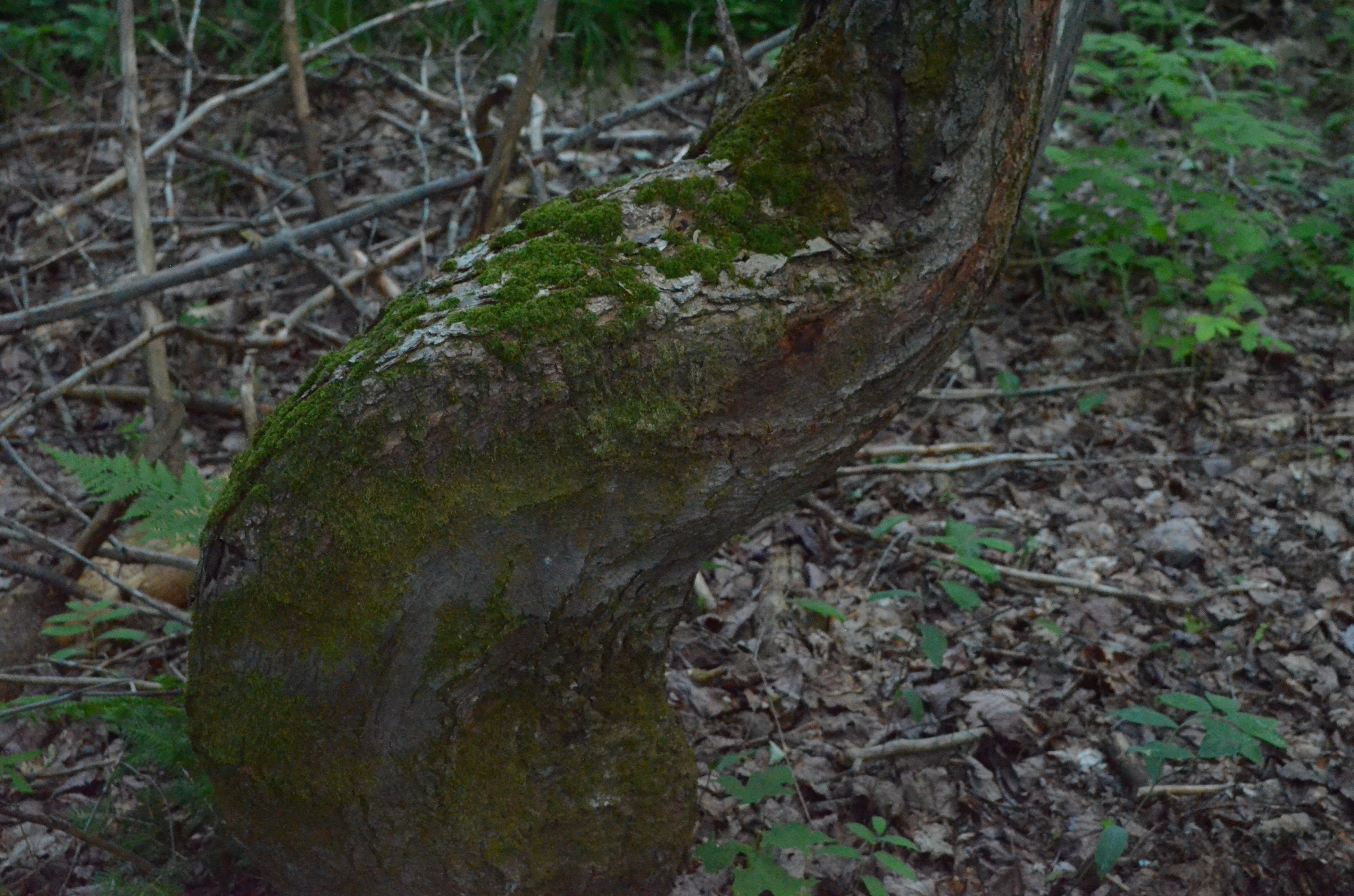 tree trunk, forest, tree, nature, no people, outdoors, growth, day, animal themes, grass, beauty in nature, close-up