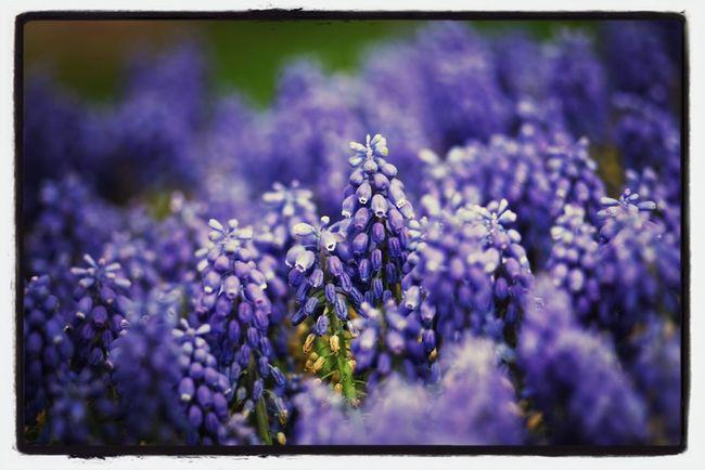 Baharımsı renkler :)