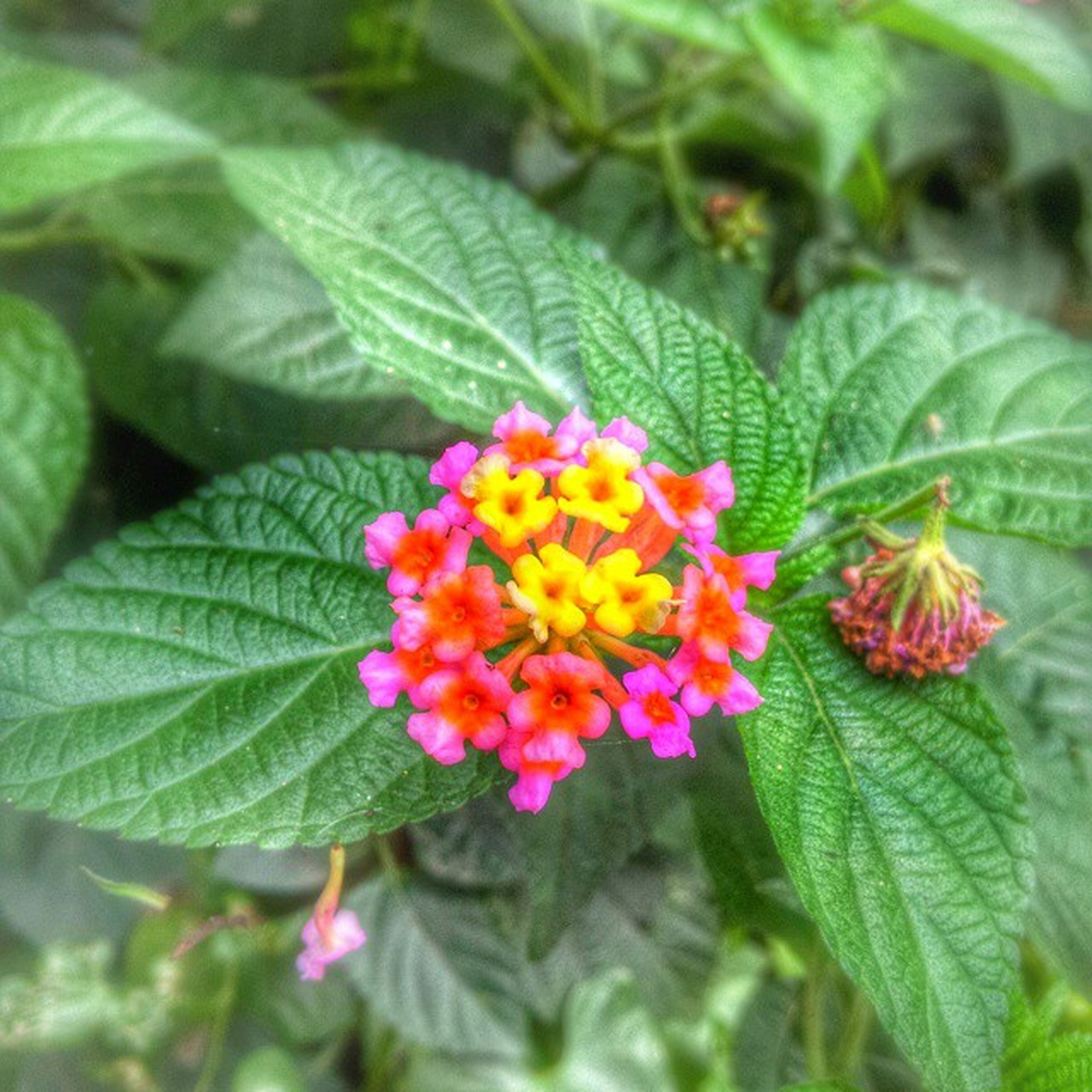 leaf, flower, freshness, growth, fragility, petal, close-up, plant, beauty in nature, green color, flower head, nature, focus on foreground, blooming, high angle view, day, outdoors, selective focus, in bloom, botany