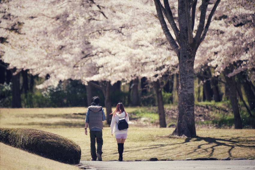 Capture The Moment Depth Of Field Springtime Sakura Walking People Leisure Activity Cherry Blossoms Street Photography Uzu St. Fine Art Tranquility Snapshots Of Life Beauty In Nature Still Life Fantasy Fragility Nature Light And Shadow Full Frame Detail Sigma EyeEm Best Shots 17_04 Art Is Everywhere The Secret Spaces EyeEmNewHere The Street Photographer - 2017 EyeEm Awards