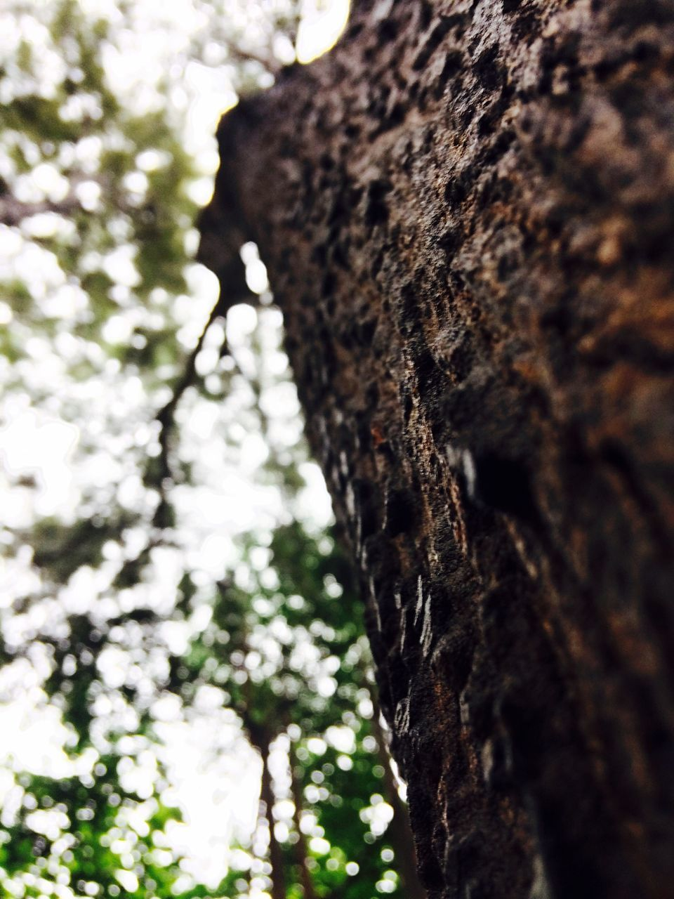 tree trunk, tree, bark, low angle view, textured, nature, day, rough, no people, focus on foreground, trunk, growth, close-up, outdoors, branch, beauty in nature, woodpecker, sky, dead tree