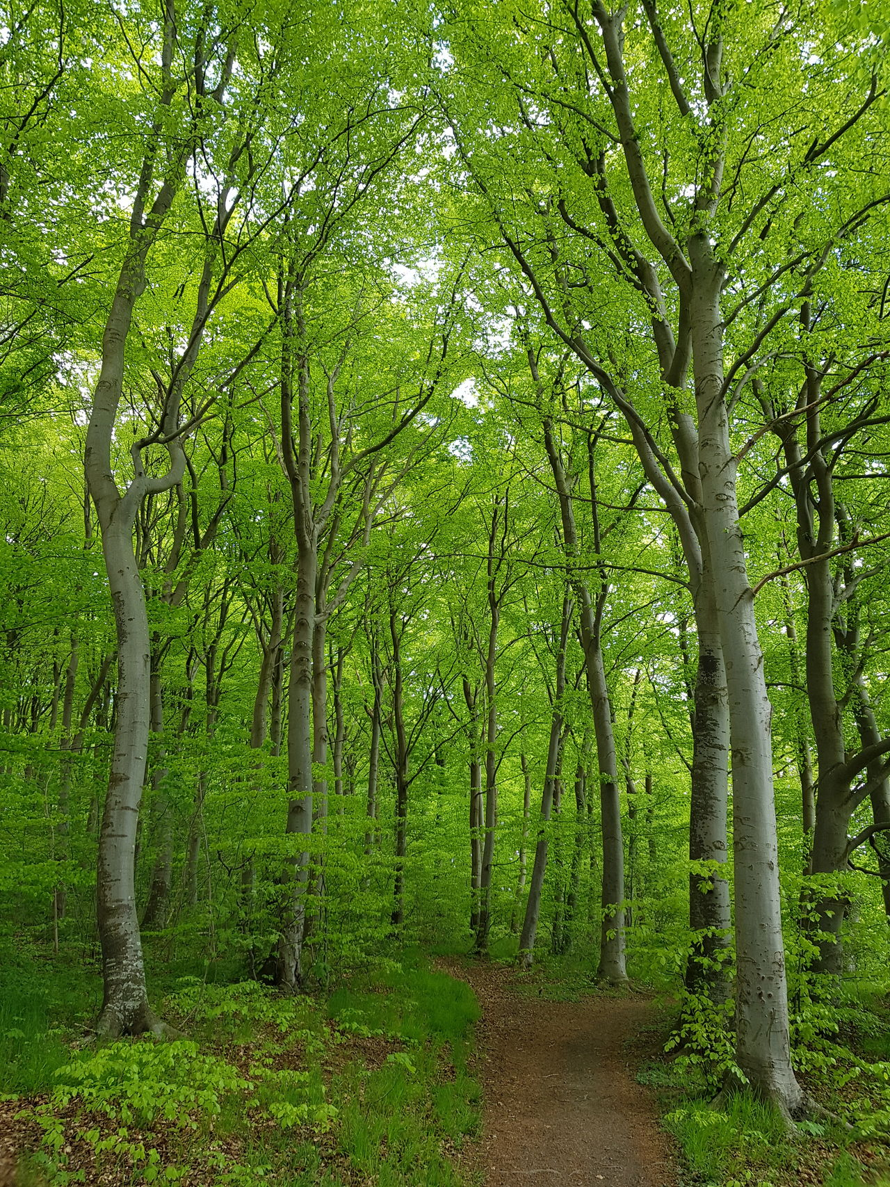 Tree Forest Green Color Nature Growth Beauty In Nature Tree Trunk Outdoors Lush Foliage Day WoodLand Tranquility Scenics No People Tranquil Scene Tree Area Grass Wilderness Area Freshness