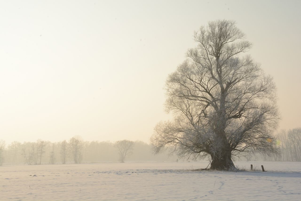 Beauty In Nature Cold Temperature Landscape_photography Nature No People Outdoors Tranquility Tree Tree In Snow Winter