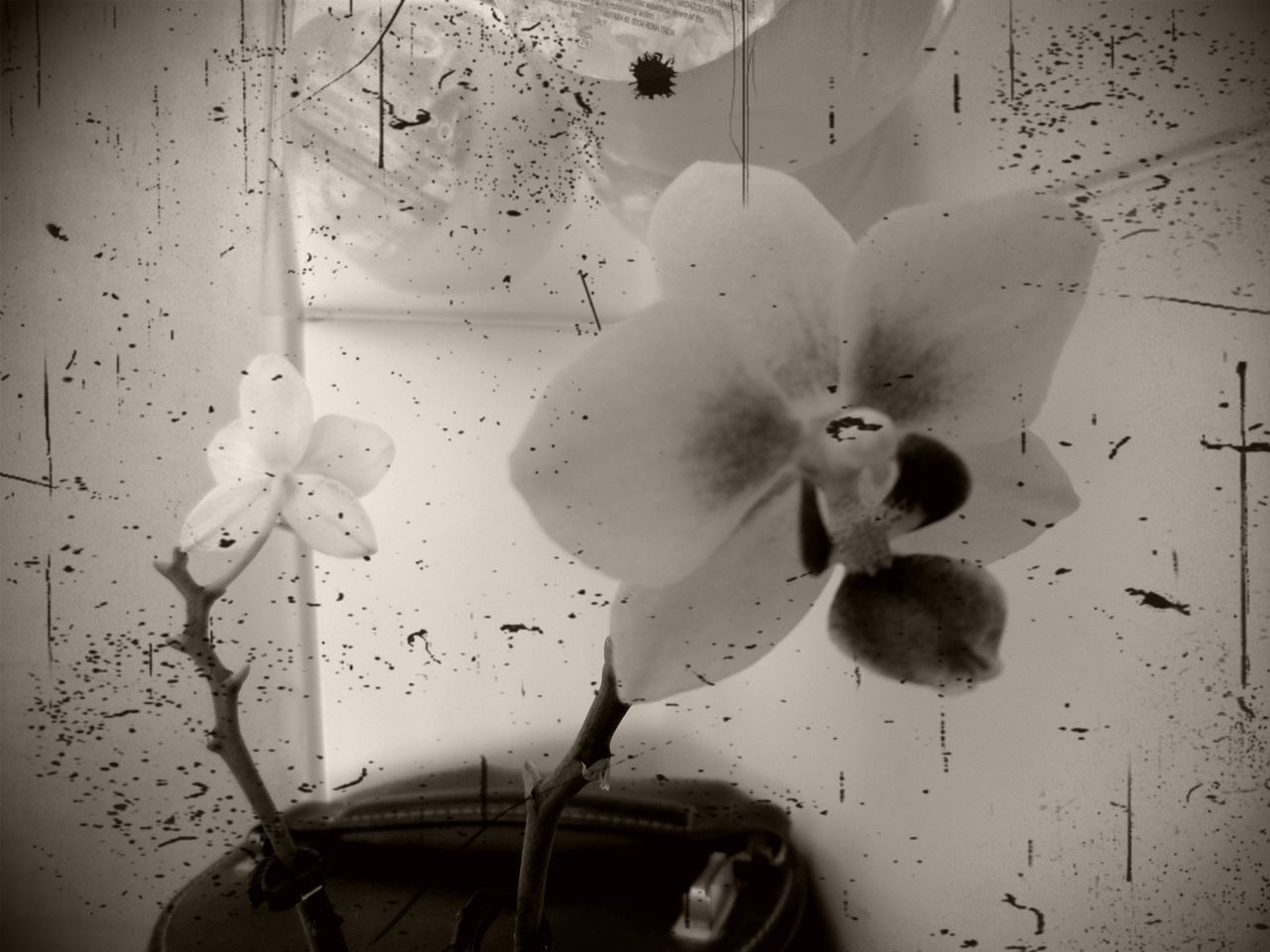 Black&white Nature Orchidee. Flower Flowers Orchids Nature_collection Blackandwhite Black And White