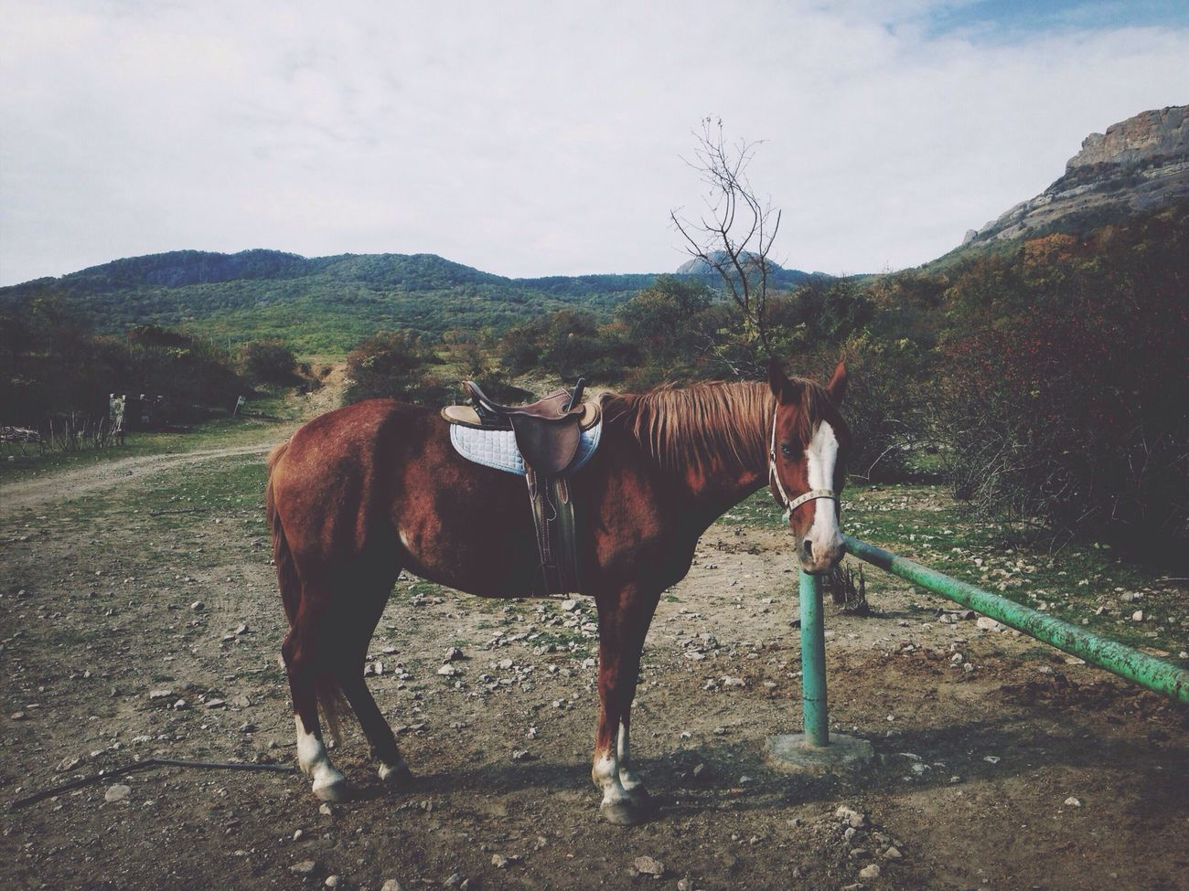 Check This Out Horse Mountains EyeEm Nature Lover