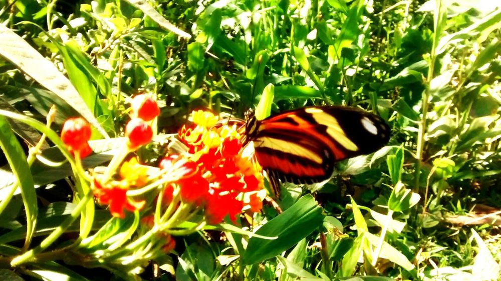 Flowers Buterfly Buterflyflowers Nature Nature_collection Enjoying The View Walking Alone...