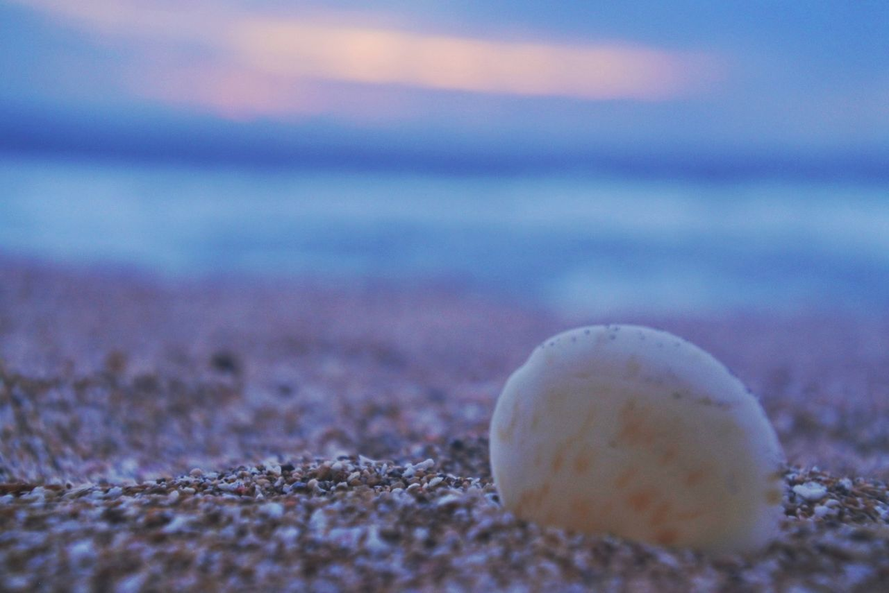 Beach Sand Sea Nature Outdoors Close-up No People Ball Day First Eyeem Photo