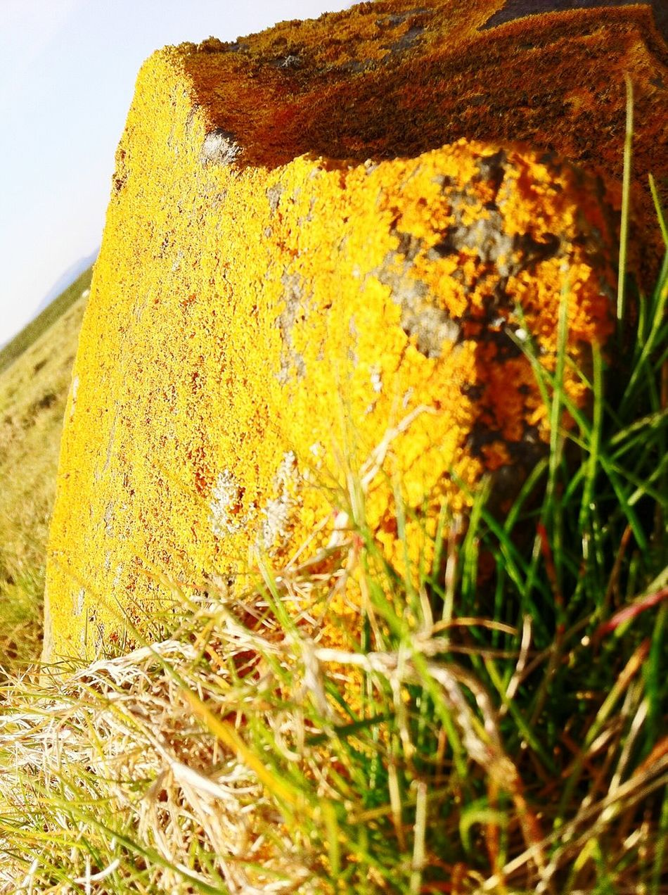 Clean air = crusty rocks No People Nature Close-up Yellow Day Outdoors Textured  Growth Beauty In Nature Fragility Sky Lichen Lichens Lichen Beauty Lichen On A Rock Rock Rock - Object Crusty Stone Stones Stone - Object Fresh Severn Estuary