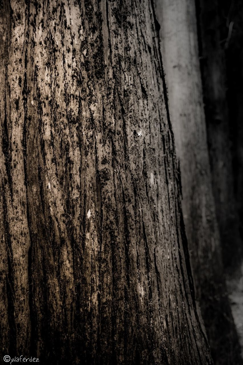 tree trunk, tree, textured, bark, nature, close-up, rough, day, wood - material, marking, focus on foreground, no people, outdoors, forest, growth