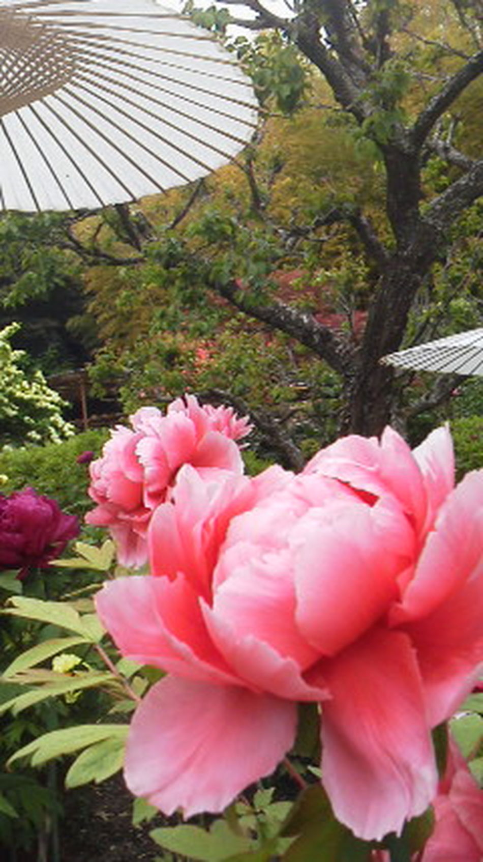 Botan Flower Porn Eyem Best Shot - My World Eyem Best Shots Nature_collection