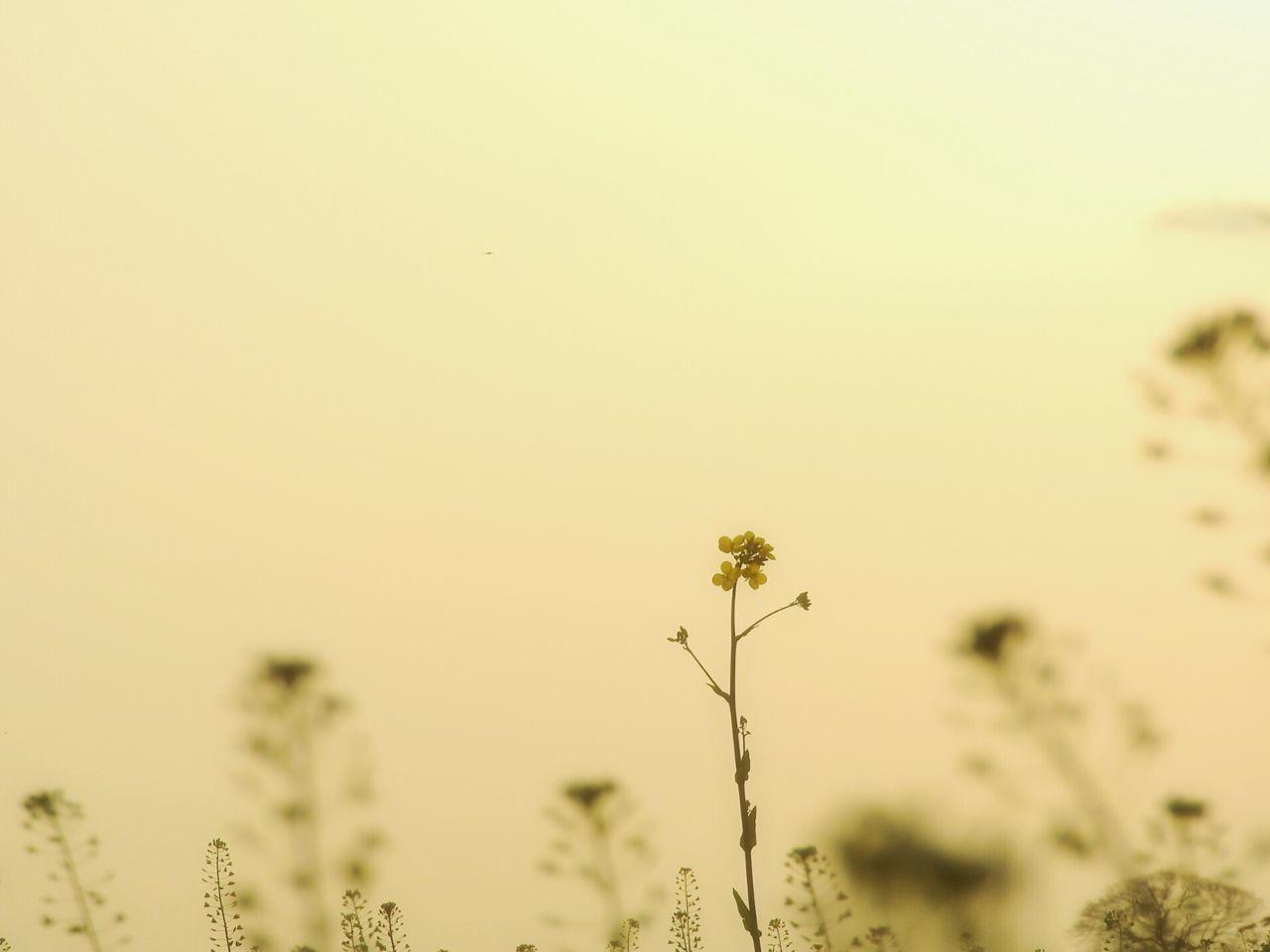 How Do We Build The World? Flowers 菜の花 EyeEm Gallery Nature Photography Eye4photography  Pastel Power The Week On Eyem Open Edit Naturelovers Sunset おはようございます。(๑•̀ㅂ•́)و✧